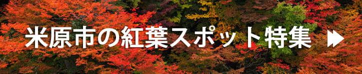 米原市の紅葉スポット特集