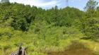 米原市にある山室湿原は手軽に行ける湿原散策スポットとしておすすめ